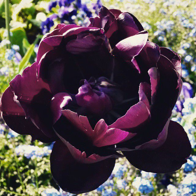 Waiting with good weather... #gothgirl #goth #gothic #metalgothgirl #shadow Jardin des plantes #mahonia #chardon #blackhero #weigela #tulipa #rosedesvents #tulipa #elegantlady #primula #primevère #aquilegia #aquilegiavulgaris #iris #irisgermanica #metalbabe #selfie #metalgirl #blueeyes #alternativegirl #alternative #woman #girlwithblackhair #girlwithlonghair #naturallonghair #longhair #l4l #blackhair #makeup #blackandwhite #frenchgirl #followme #f4f #piercing #bindi #thirdeye #frenchgirl #palegirl #picoftheday #pinup #calendula #calendulaofficinalis #flowers #fleur #nature #campagne #countryside #grass #fleurs #flower #red #spring #nature #flor #blume #花 #꽃 #פרח #Fiore #フラワー #color #colorful #jardindesplantes #paris #france #pretty #nice #beautiful #garden #vegetation