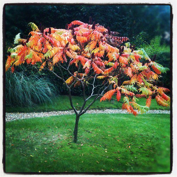 Un arbre à l'automne