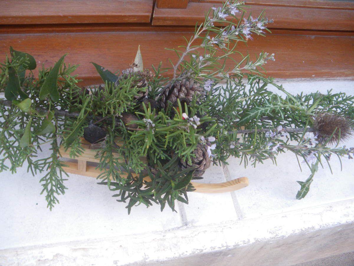 romarin en fleurs sur traineau