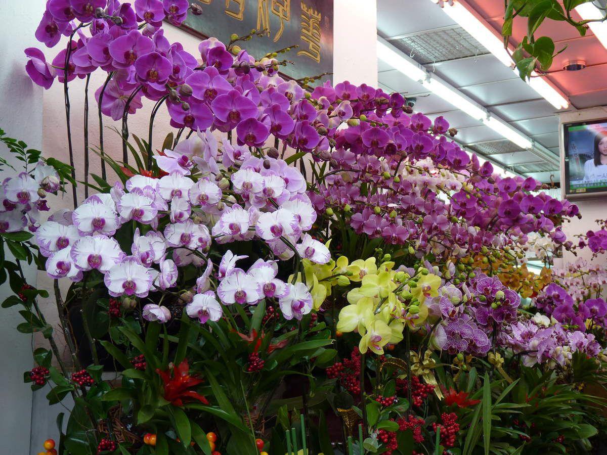 HK marchés aux fleurs, aux oiseaux aux poissons