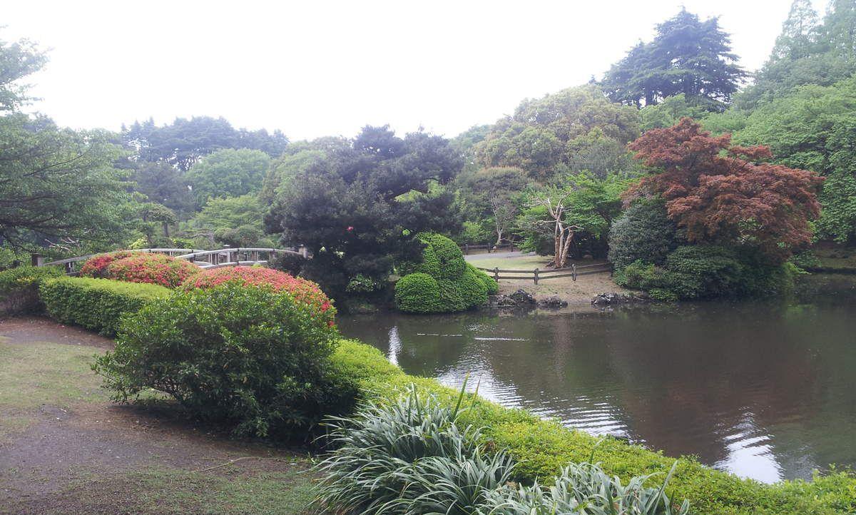 Shinjuku-gyoen, son jardin français,  son jardin japonais, et l'énorme cerisier dont les fleurs sont maintenant au sol.