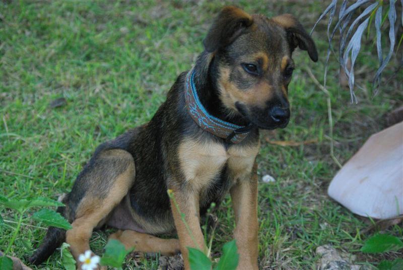 SCARLETT est un magnifique chiot de 4 mois et attend son maître