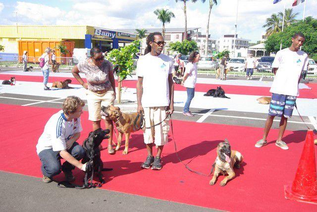 Nos partenaires et l'article de France Antilles du 12 et 13 12 2014 et les photos du jour