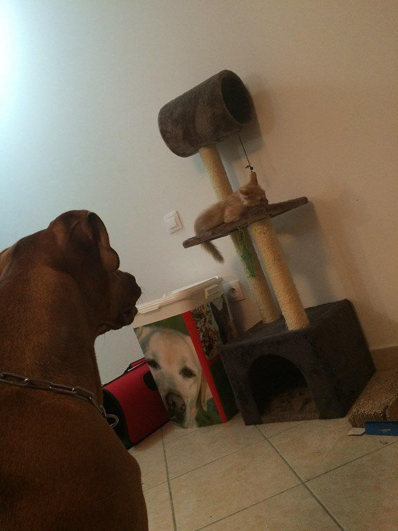 KREM s'appelle BAILEY - chaton -  adopté à 3 mois