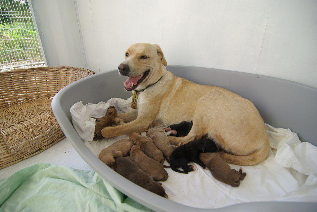 SAM fait partie de ses 9 bébés adorables et choyés par leur maman, nés le 13 juin