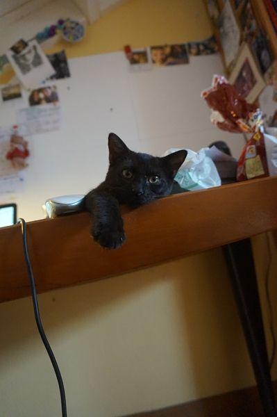 ROBB s'appelle LEONIDAS - Bébé de Mimosa - chaton 3 mois - adopté