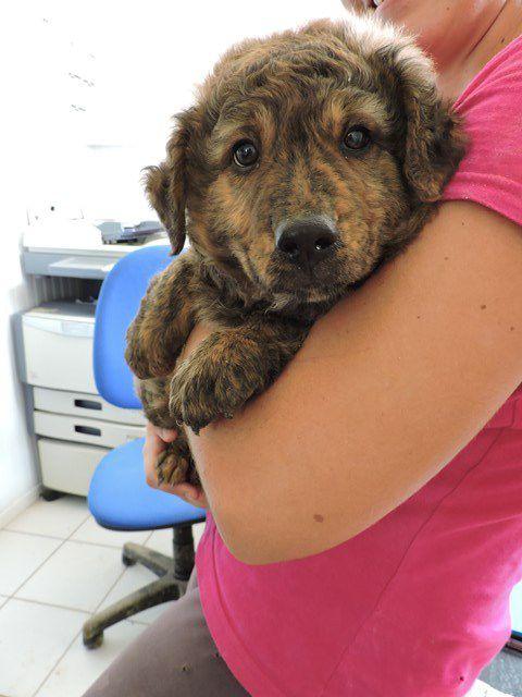 MARSOUILLE s'appelle GWADA - mâle - adopté à 2 mois