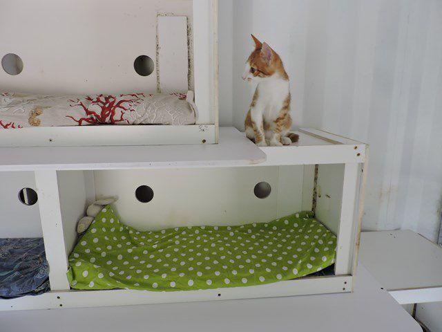 CANAILLE s'appelle SIMBA - chaton - 3 mois - adopté
