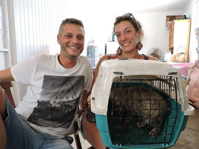 Une nouvelle vie pour ces chats qui avant le Refuge étaient euthanasiés