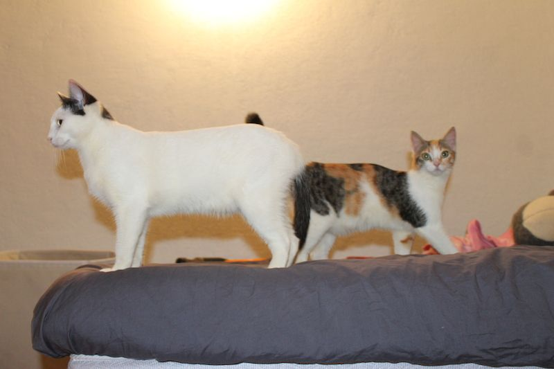 1ers jours en famille.....que de changement pour des chats qui ont passé plusieurs mois au Refuge !
