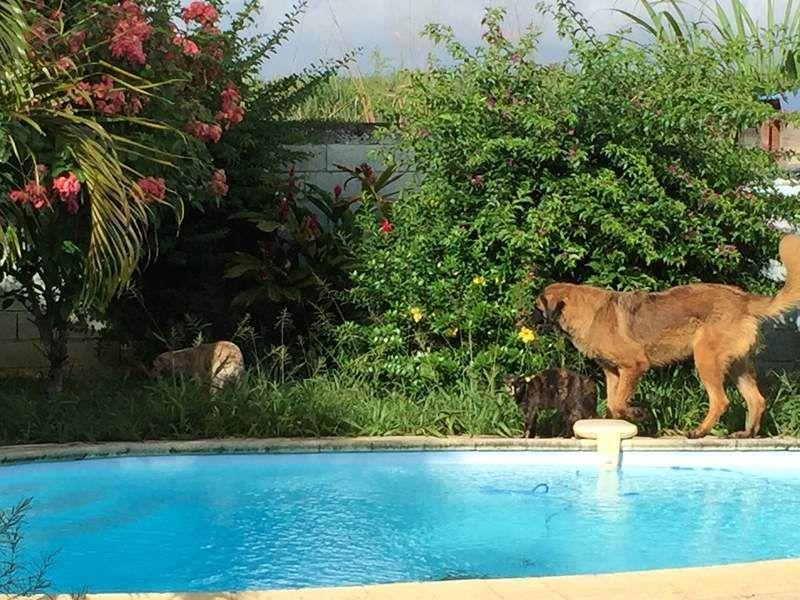 """La nouvelle vie de Gribouille, une """"très grosse copine chien très sympa"""" et plus de 10 chats ! Bravo Gribouille pour ton pouvoir d'adaptation, amus-toi bien !"""