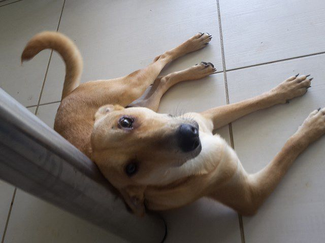 MOWGLI - mâle - 7 mois -  adopté