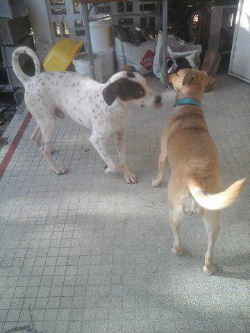 2 premiers à la maison.....PONGO et DAGGA très heureux ensemble ! Super