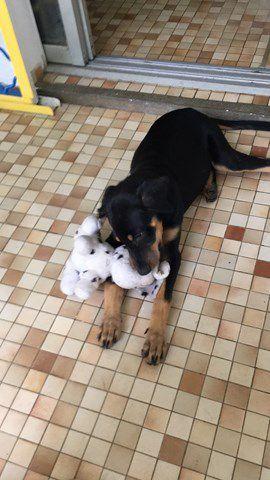 MYLONE s'appelle GAIAC - chiot femelle - 4 mois - adoptée