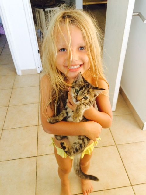 MAKI - chaton femelle - 3 mois - adoptée