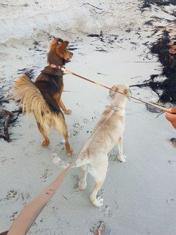 Sympa la plage avec ma copine PLUME ! et après câlins !