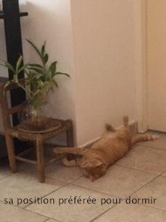 sa position préférée pour dormir !