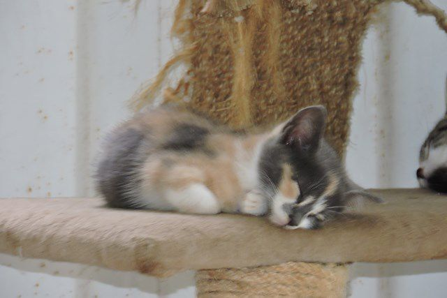 SMARTIES s'appelle CHEESY - chaton femelle - 2 mois ...
