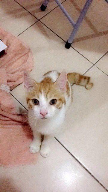 l'arrivée à la maison : Mélie nous dit qu'il s'est adapté de suite à la maison, formidable Mahou !
