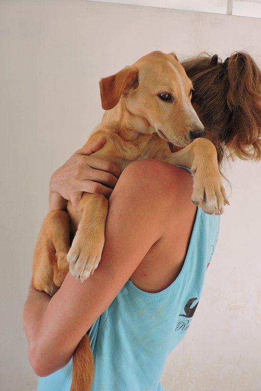 CHERCHONS FAMILLE D'ACCUEIL - MOONLIGHT - femelle croisée labrador - née le 15 septembre 2016 - à adopter