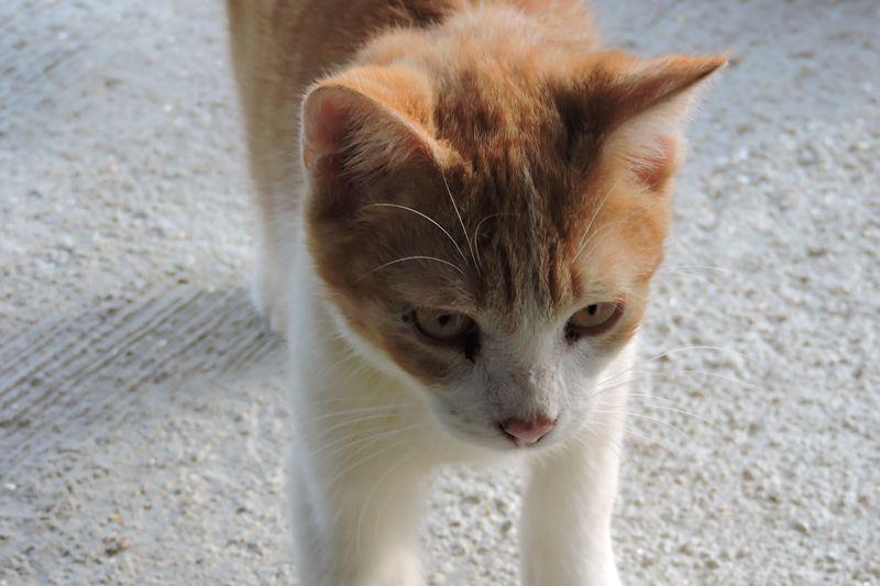PEPITO - mâle - né le 09 juillet 2016 - à adopter