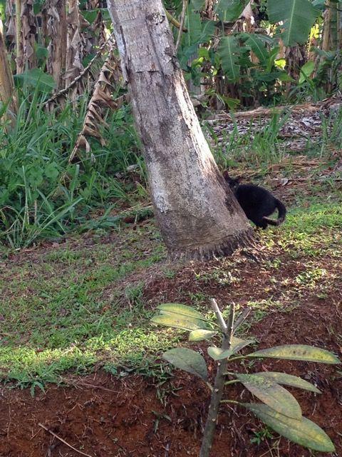 SATINE - beauté noire - née le 14/07/2016 - adoptée