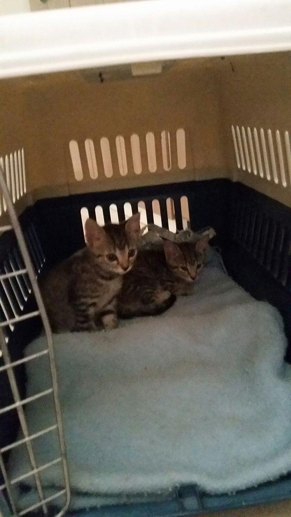 CARIB et BOKIT - 2 mois - les bébés de LOO - adoptés ensemble