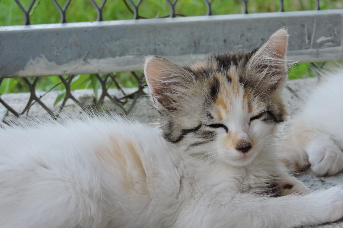 COLOMBINE s'appelle JADE - bébé femelle de METIS - adoptée