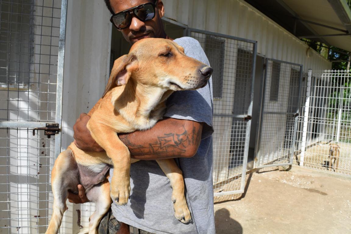 POKA - créole mâle croisé labrador - né le 17/12/2016 - à adopter