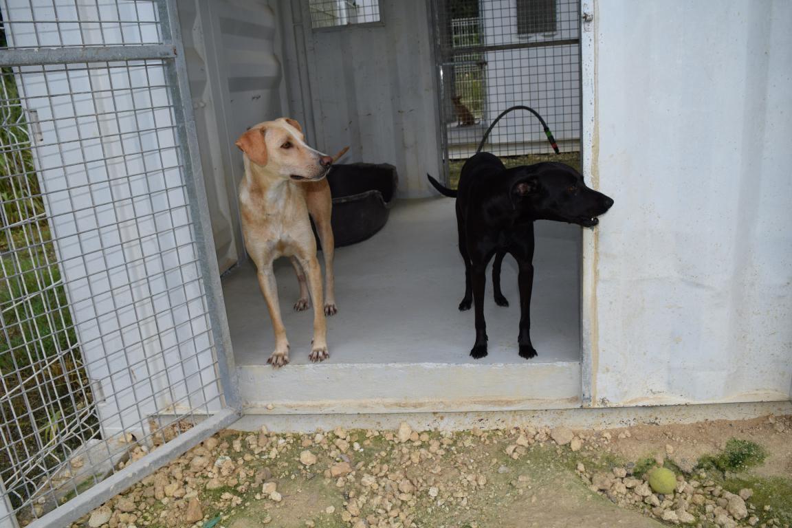 MOANA - femelle créole - née le 18/04/2016 - adoptée