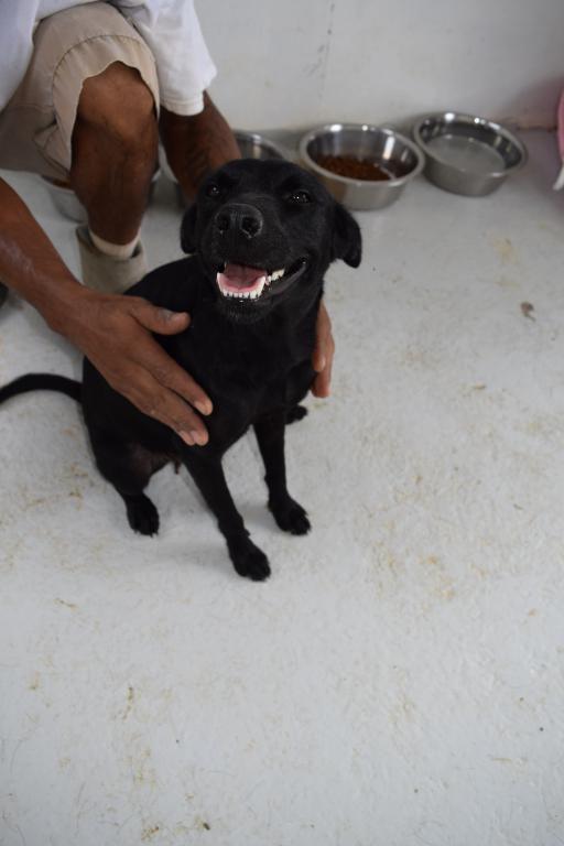 KAPI - femelle née le 01/08/2016 - à adopter