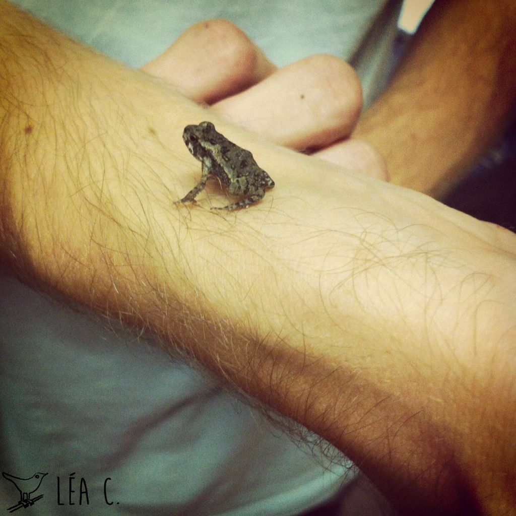 A toad → un crapaud ≠ a frog → une grenouille