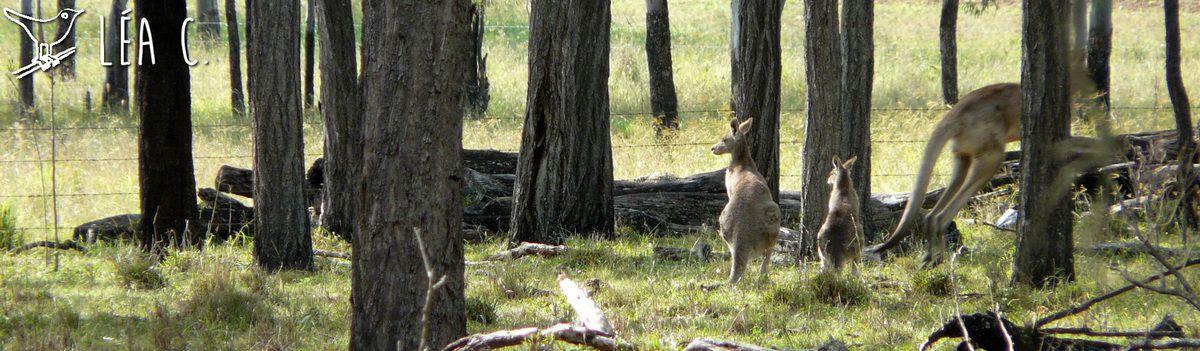 Le bush australien #4