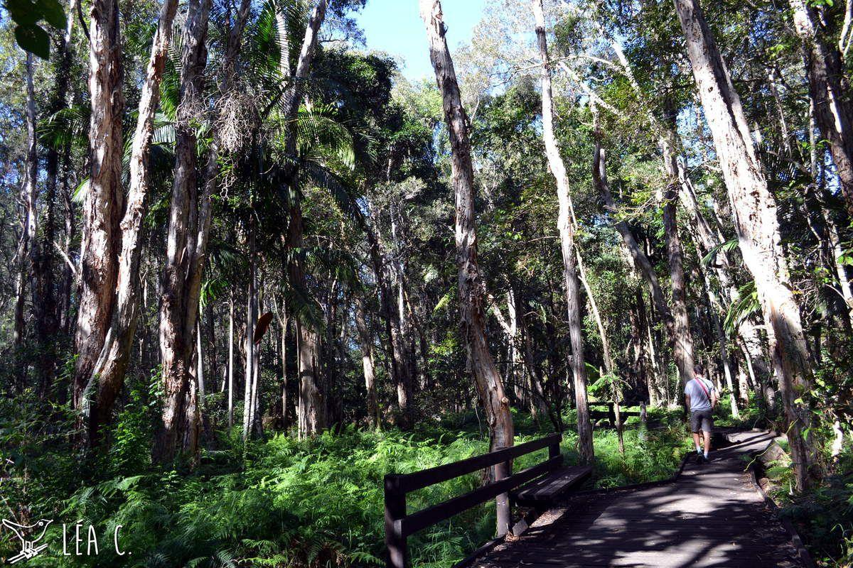 Promenade dans le Daisy Hill Conservation Park, il s'agit du parc bordant le Daisy Hill Koala Centre.
