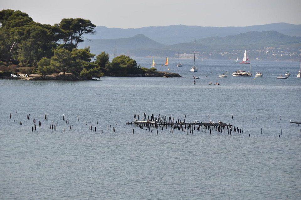 La lagune du Brusc, ses parcs à moules, la pointe des Embiez