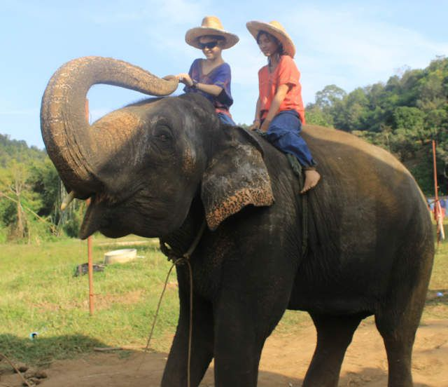 Zoom sur les éléphants d'Asie et d'Afrique