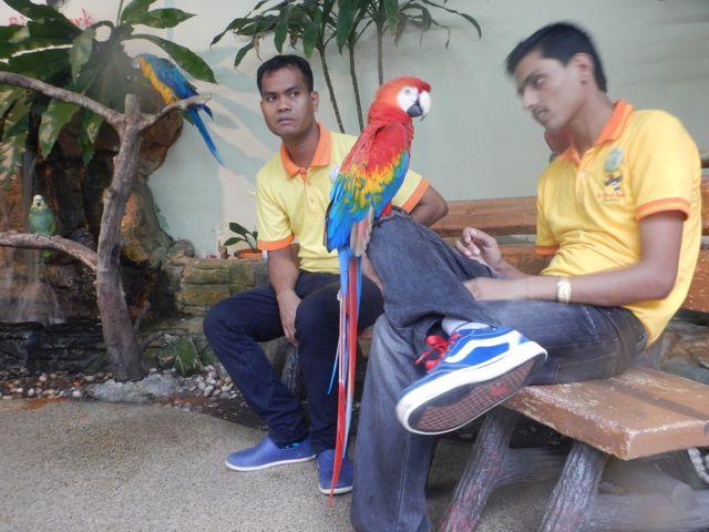Cet oiseau est mon animal préféré