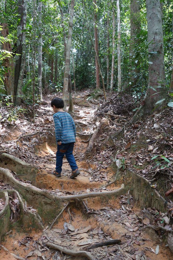 Détour dans le Taman Negara