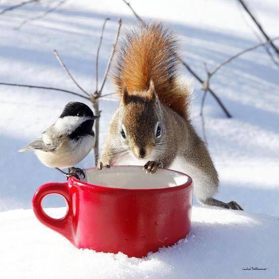 thé et café svp !