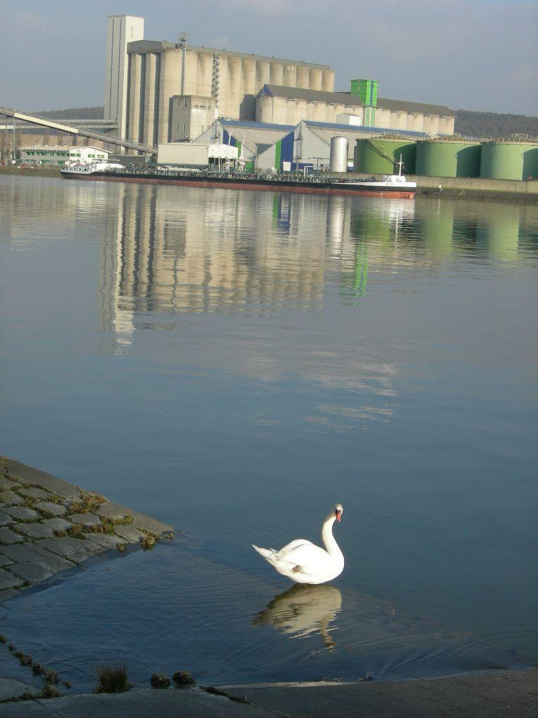 La nouvelle cale du bac de Hautot sur Seine
