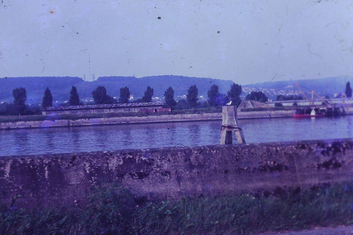 Les ducs-d'albe d'Hautot sur Seine