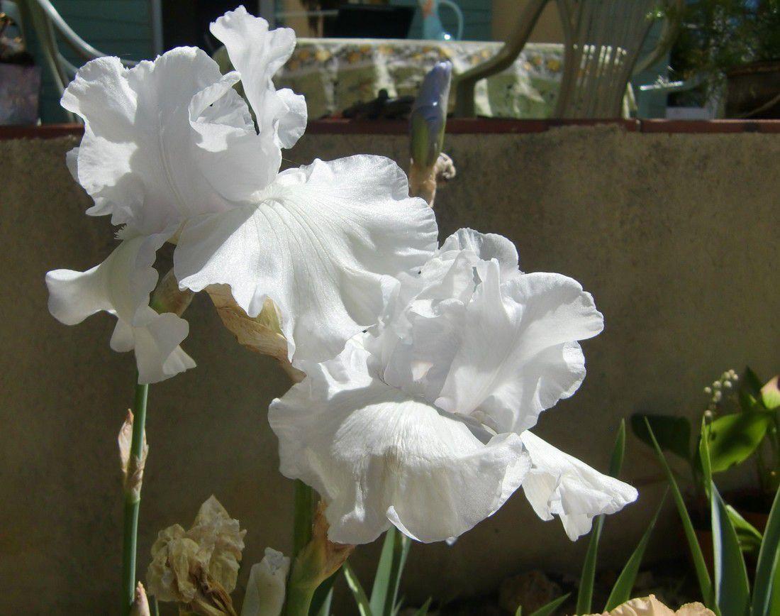 Les sens d'Iris
