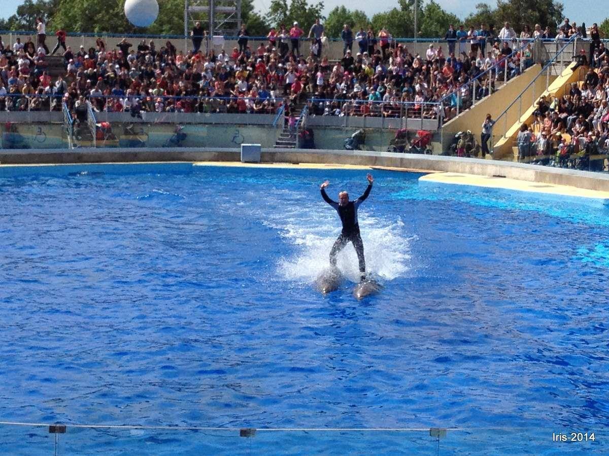 Complicié avec des dauphins
