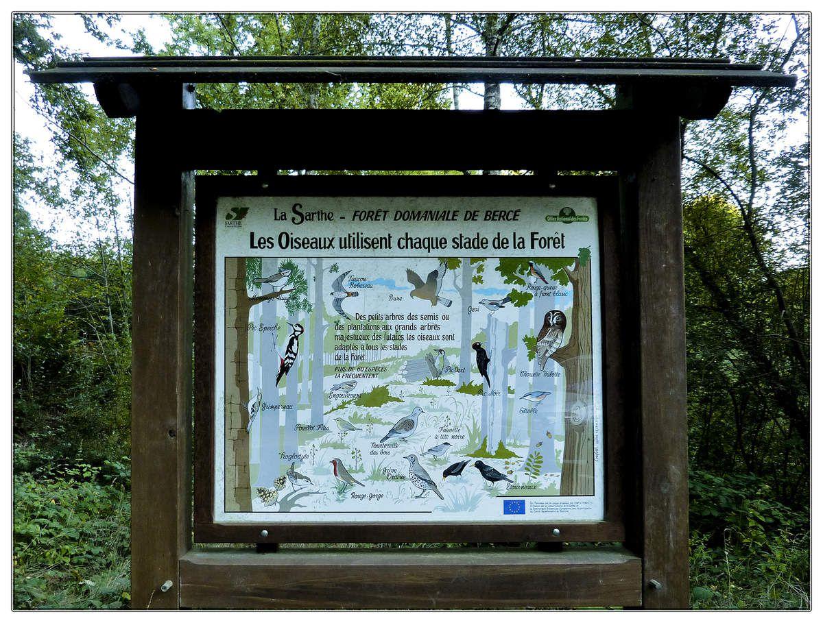 Forêt de Bercé - 72 - Faune et flore
