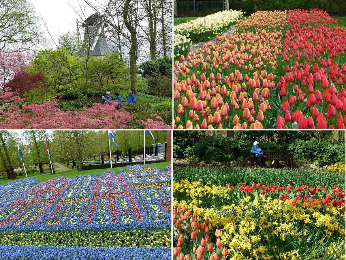 quelques photos du parc  de Keukenof dont la serre Béatrix