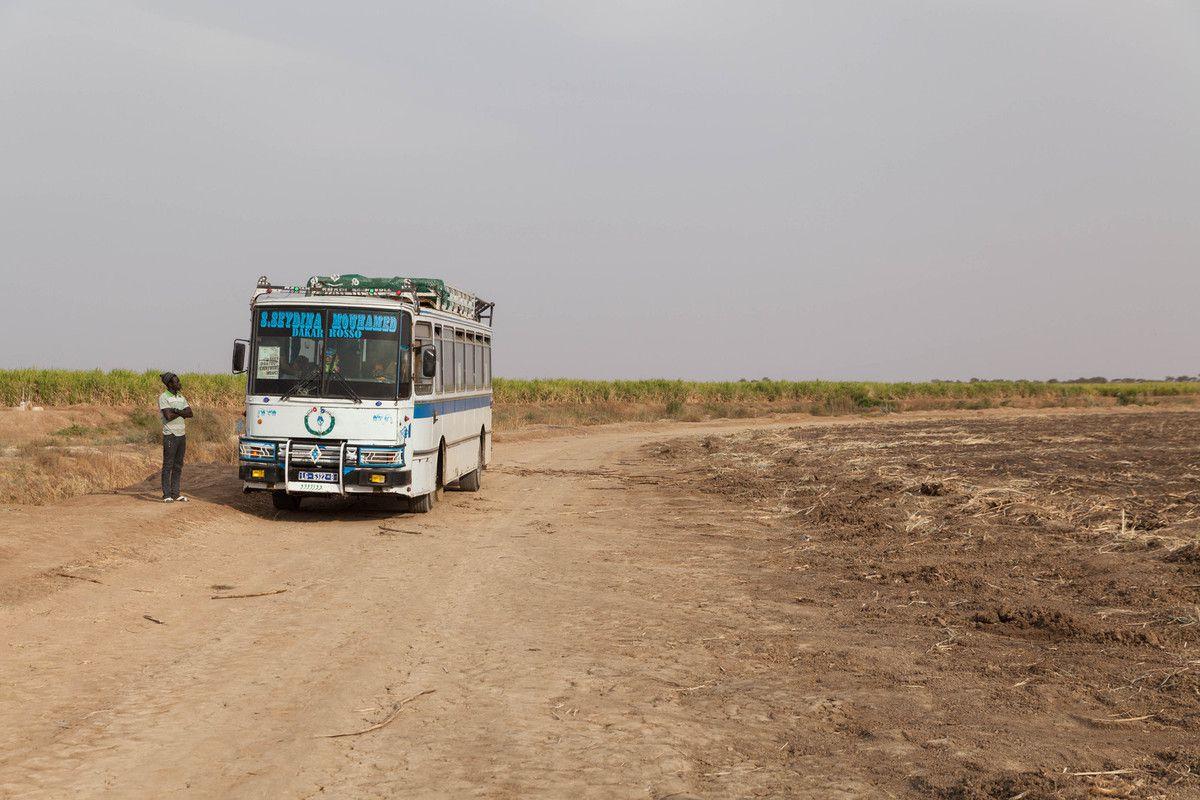 Sénégal 2016 - Richard Toll