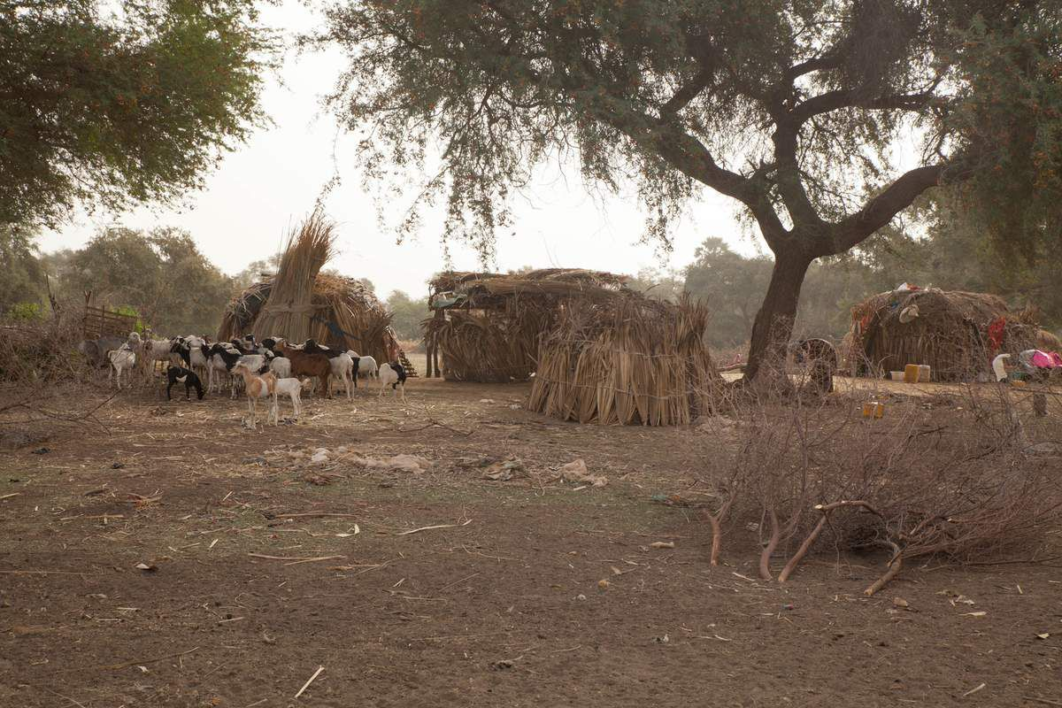 Sénégal 2016 - Un village Peul
