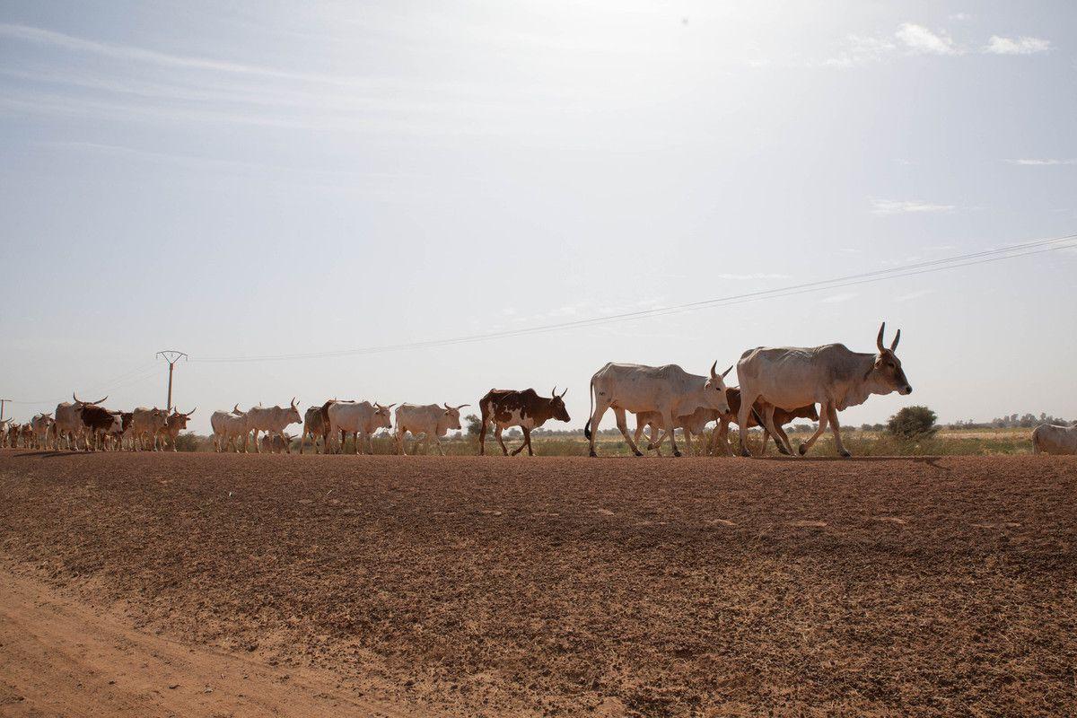Sénégal 2016 - L'île à Morphil
