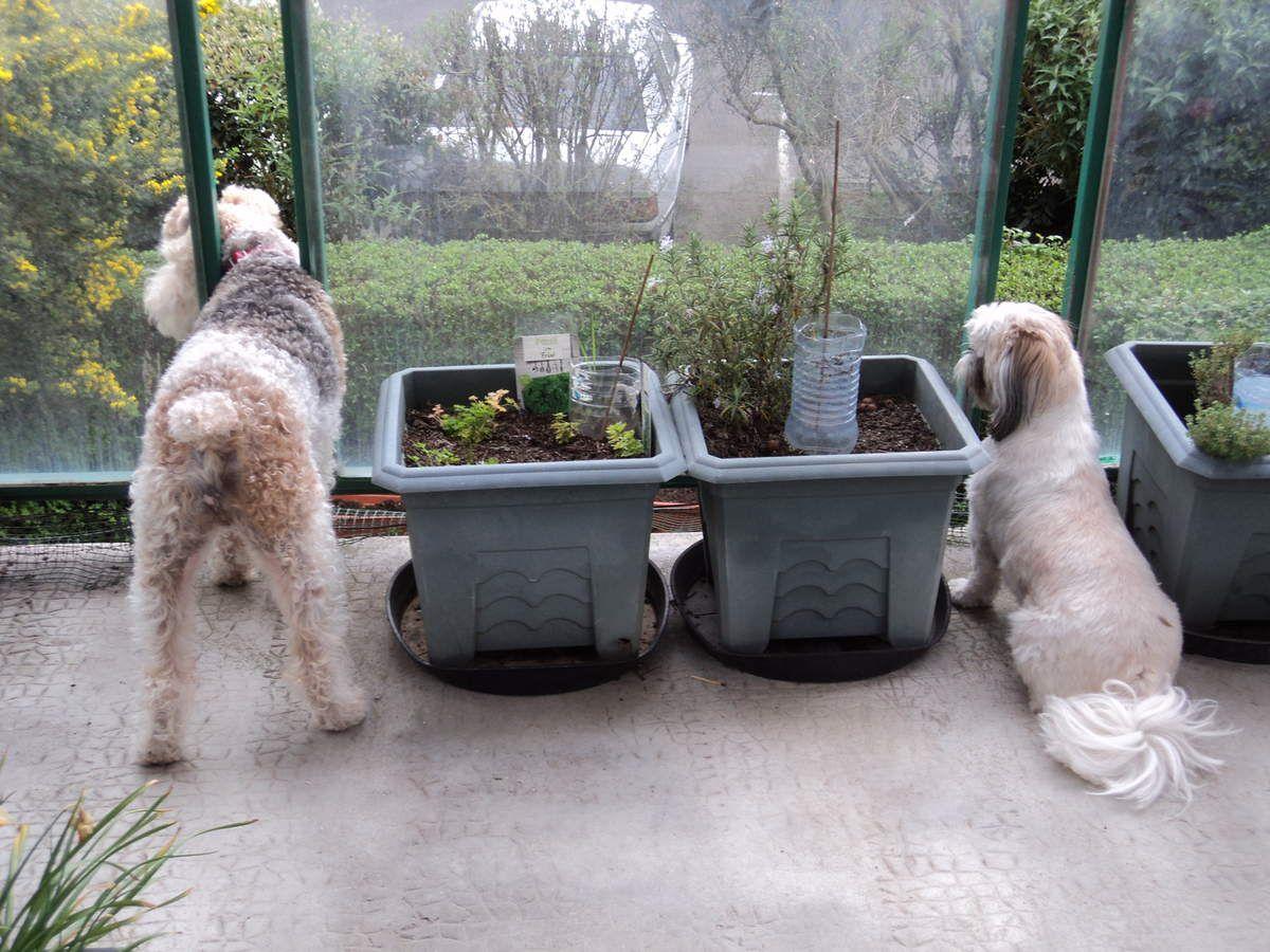 Sur le balcon, ils surveillent tout se qui se passe !