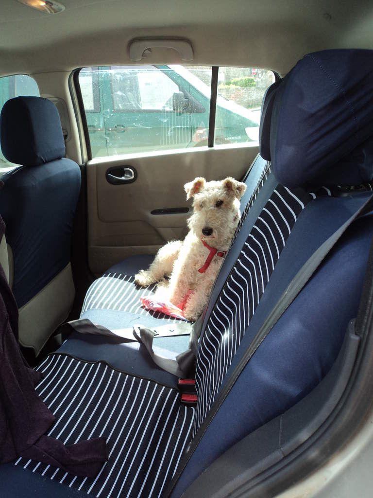 Gary se tient bien partout !! en voiture il surveille la route et surtout il reconnait tous les endroits. C'est un chien plutôt extraordinaire !